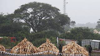 Shuidong, la ville chinoise au coeur du trafic d'ivoire venant d'Afrique