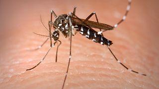 750 ألف شخص يموتون سنويا بسبب البعوض