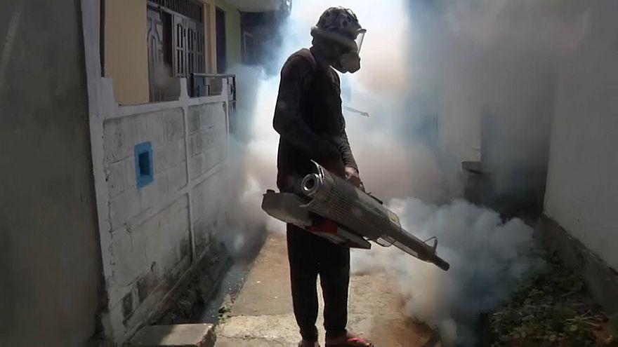 En guerre contre la dengue