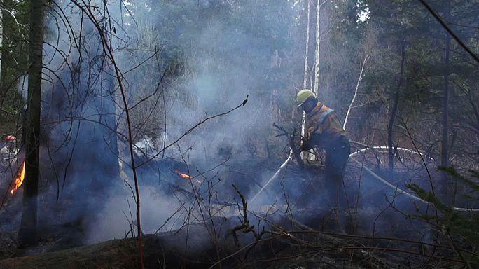 Сибирские пожары: власти занижали данные