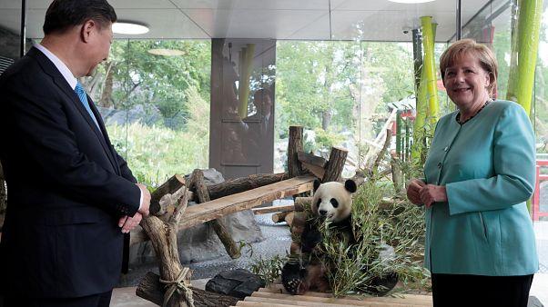 "Les pandas ""ambassadeurs"" au zoo de Berlin"