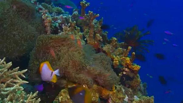 Lemaradt a listáról a Nagy-korallzátony