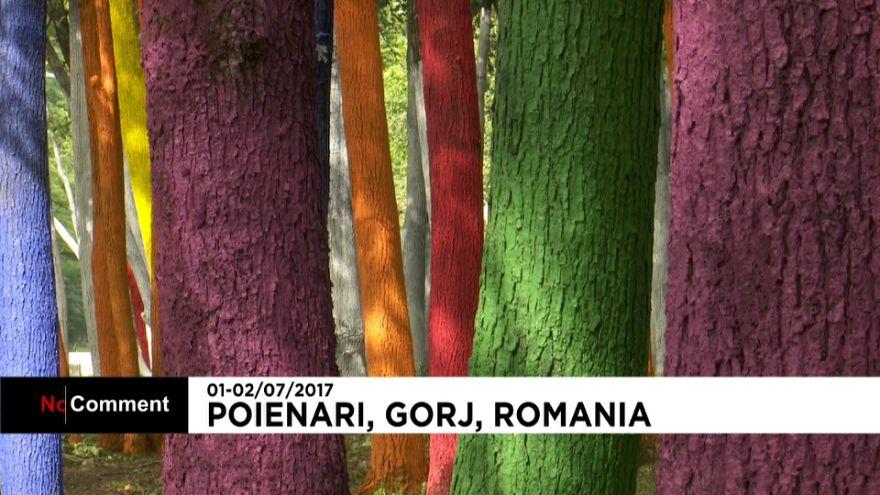 Quand les arbres en voient de toutes les couleurs...