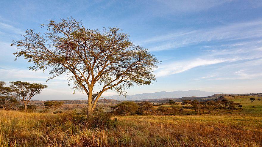 Image: The Crater Area inside Queen Elizabeth National Park in Uganda in 20