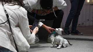 Image: Attendees and workers play with Aibo at the South by Southwest (SXSW