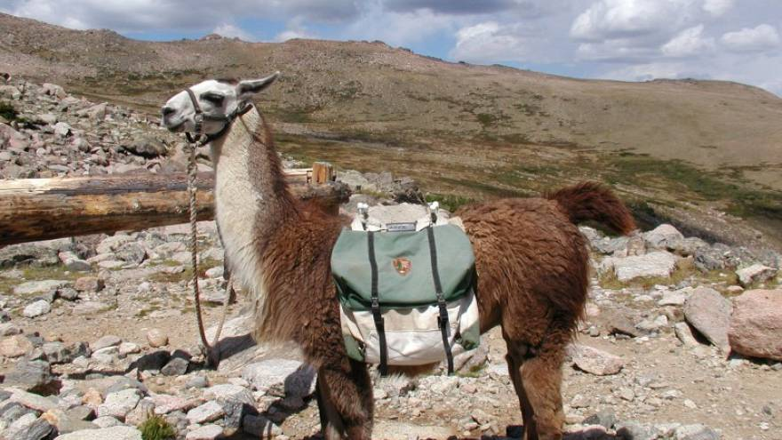 Israeli army replaces llamas with robots