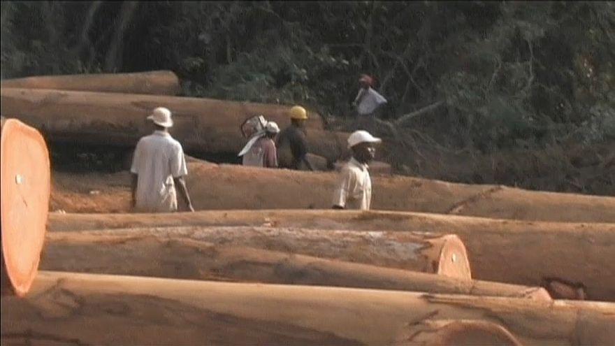 Banco Mundial e FAO ajudam Maputo a combater desflorestação