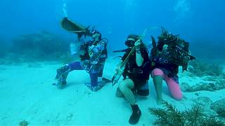 Florida underwater festival aims to promote reef preservation