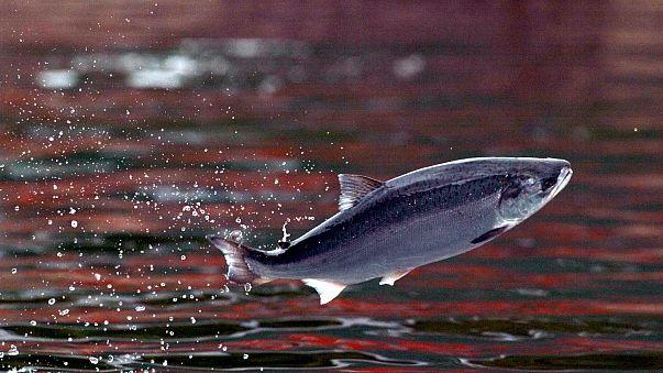 4-Jähriger fängt einen 19 Kilogramm schweren Fisch