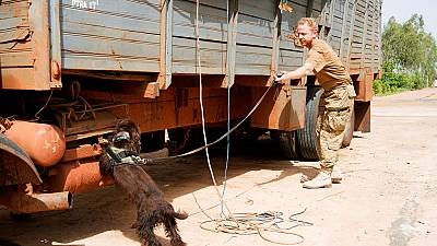Mali employs Dutch dogs to save elephants