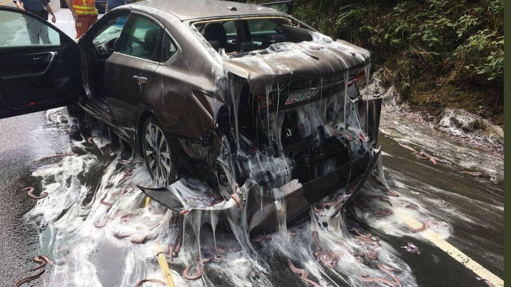 أوريغون: سمك الجريث تعطل الطريق السريع