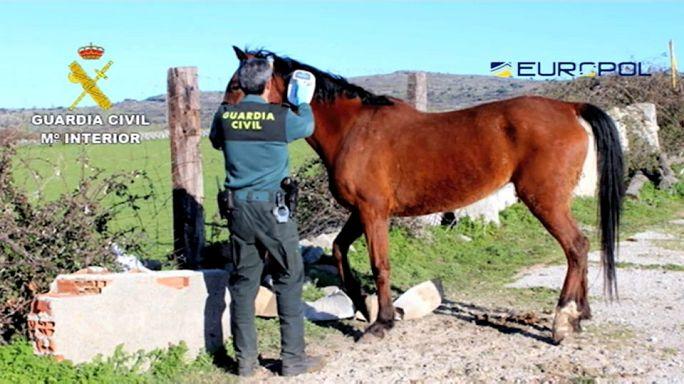 Dozens held in Spain in horsemeat scam probe - Europol