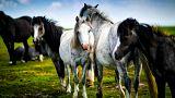 شبکه بزرگ قاچاق گوشت اسب در اروپا متلاشی شد