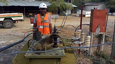 Baboon hospitalized after causing massive power cut in Zambia