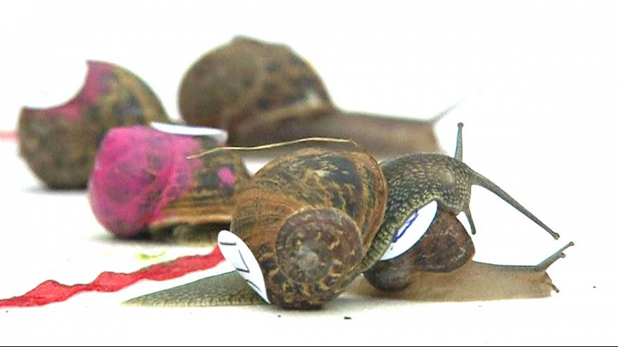 Snails take their time in annual racing championship