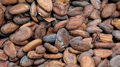 Ghana: haro sur la contrebande du cacao ivoirien