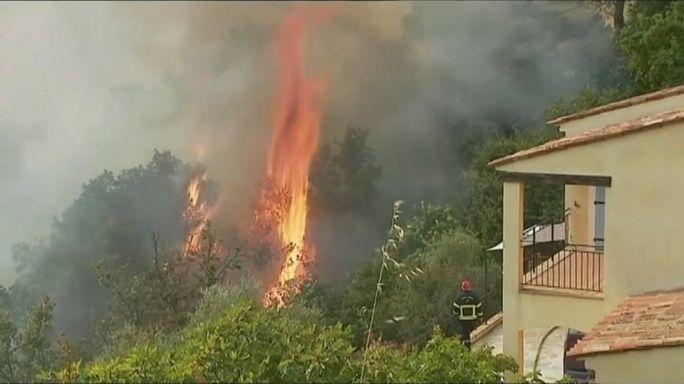 Incendies en France : Castagniers aux aguets