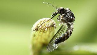 Google dichiara guerra alle zanzare