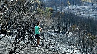 Hırvatistan'ın Adriyatik kıyılarında etkili olan yangının etkisi gün yüzüne çıktı