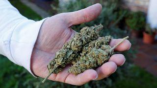 """Legal High"" in Uruguay"