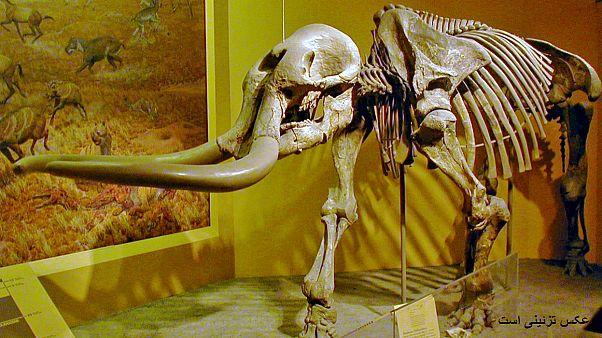بازیگوشی پسربچه ده ساله به کشف فسیل یک میلیون ساله انجامید