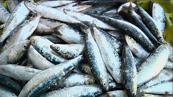 Les Portugais bientôt privés de leurs sardines ?