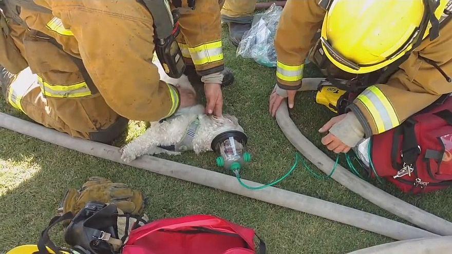 Feuerwehrleute retten Jack aus brennendem Haus