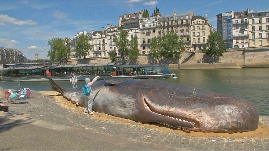 Baleia estendida no cais do Sena, em Paris