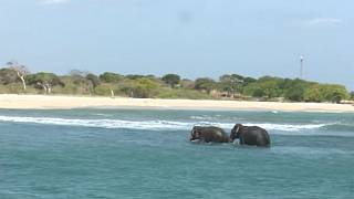 Sri Lankan navy saves two elephants washed out to sea