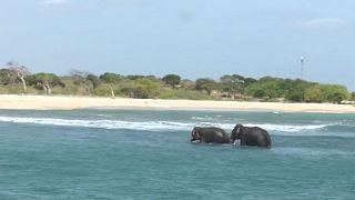Sri Lanka: Denize sürüklenen filler kurtarıldı