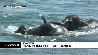 Elefantes arrastados pelo mar socorridos no Sri Lanka