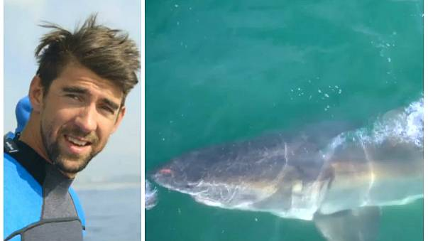 السباح مايكل فيلبس يخسر سباقه أمام القرش الأبيض