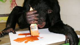Exhibition of 'Ape Art' opens in Florida