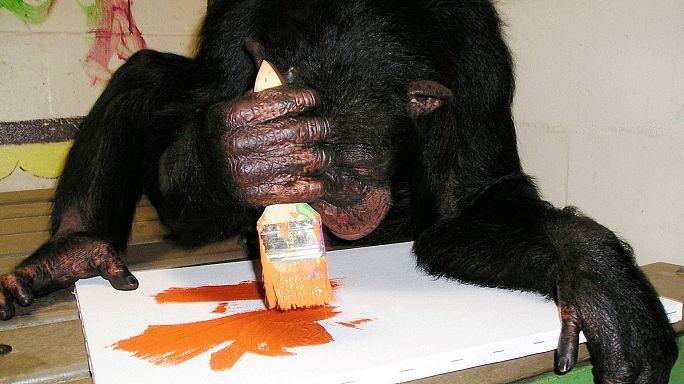 """""""Arte da scimmia"""", in mostra le opere di primati famosi"""
