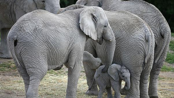 Επίσκεψη ελεφάντων σε χωριό