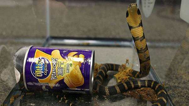 Man 'smuggled venomous snakes in crisp container'