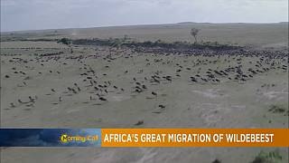 La Tanzanie : meilleure destination safari Afrique