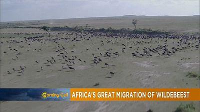 Tanzania: Leading Safari destination [Travel]