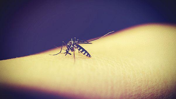 چرا پشهها بعضیها را بیشتر نیش میزنند؟