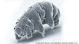 Los secretos del genoma del tardígrado, una especie indestructible