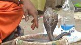 الهندوس يمجدون ثعبان الكوبرا