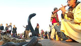 Φεστιβάλ φιδιού στην Ινδία