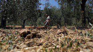 Kuraklık İtalya'da tarımı vurdu! Zarar 2 milyar Euro'yu aştı