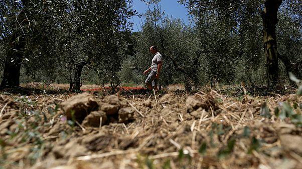 L'Italie souffre de la sécheresse