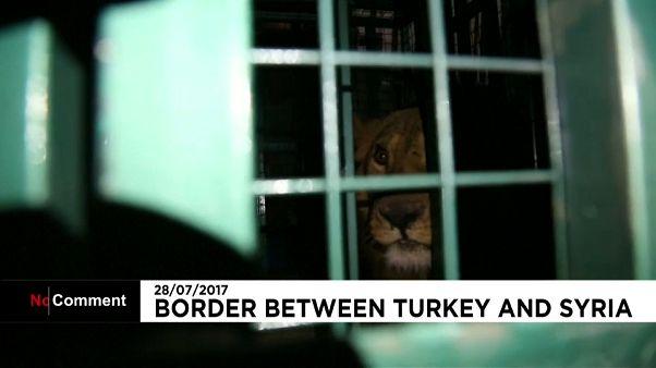 Állatokat mentettek ki a szíriai Aleppóból