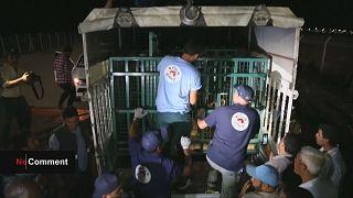 Suriye'de hayvanat bahçelerinde zarar gören hayvanlar Türkiye'ye naklediliyor
