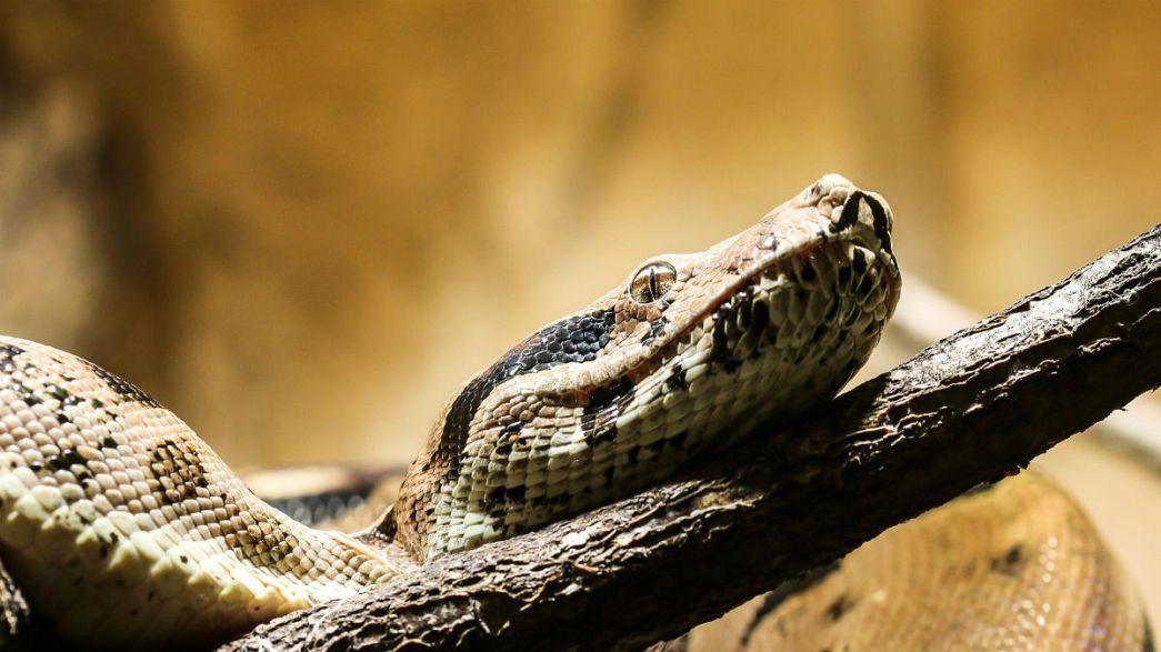Arcára ragadt kígyó miatt hívta a mentőket egy nő