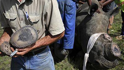 Zambie : arrestation de 3 Chinois pour trafic de cornes de rhinocéros