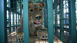 La nuova vita degli animali dello zoo di Aleppo