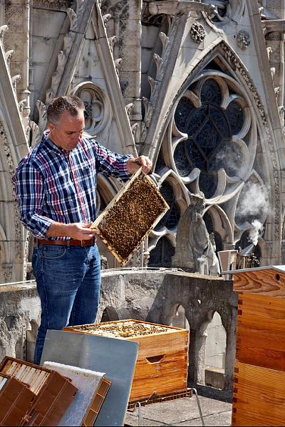 Bee keeper of Notre Dame Cathedral Nicolas Geant.